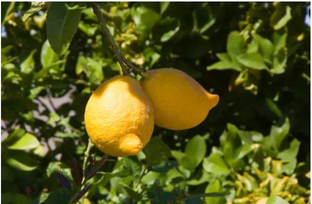 1709030110 - [후방주의!] 기분이 이상해질 만큼 야한 '19금' 과일과 야채 (사진 19장)