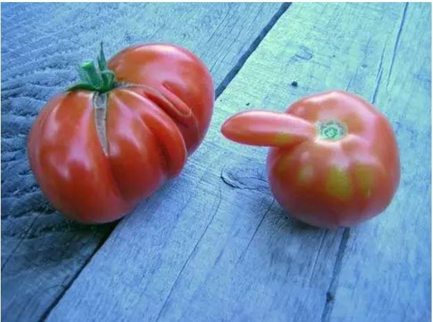 1709030117 - [후방주의!] 기분이 이상해질 만큼 야한 '19금' 과일과 야채 (사진 19장)