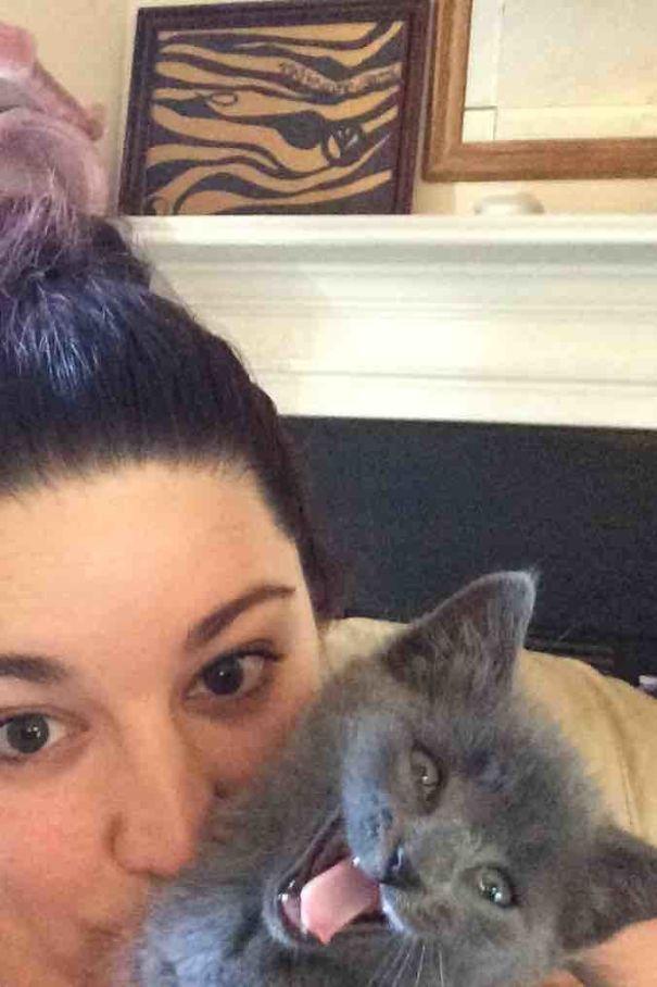 598c1e540e973 ylpvgub  605 - 주인과 '셀카' 찍기 싫은 고양이들의 반응 (사진 15장)