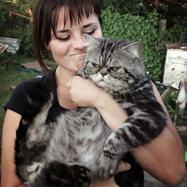 598dc0c132099 img 1363  605 - 주인과 '셀카' 찍기 싫은 고양이들의 반응 (사진 15장)