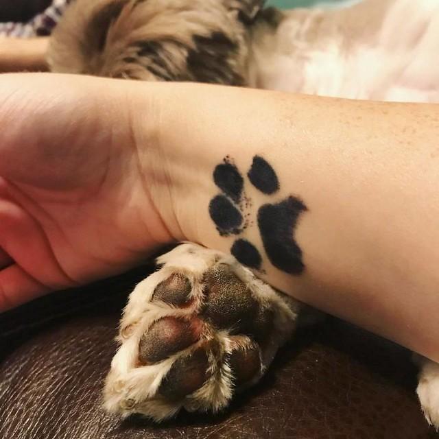 awebic-tatuagens-cachorros22