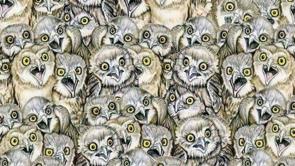e689bee8b293e592aa - 傻眼貓咪!網路瘋傳能在「1分鐘找到貓咪」的人IQ高達140!網友看到解答:「這是耍我嗎?」