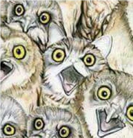 e689bee8b293e592aa2 - 傻眼貓咪!網路瘋傳能在「1分鐘找到貓咪」的人IQ高達140!網友看到解答:「這是耍我嗎?」