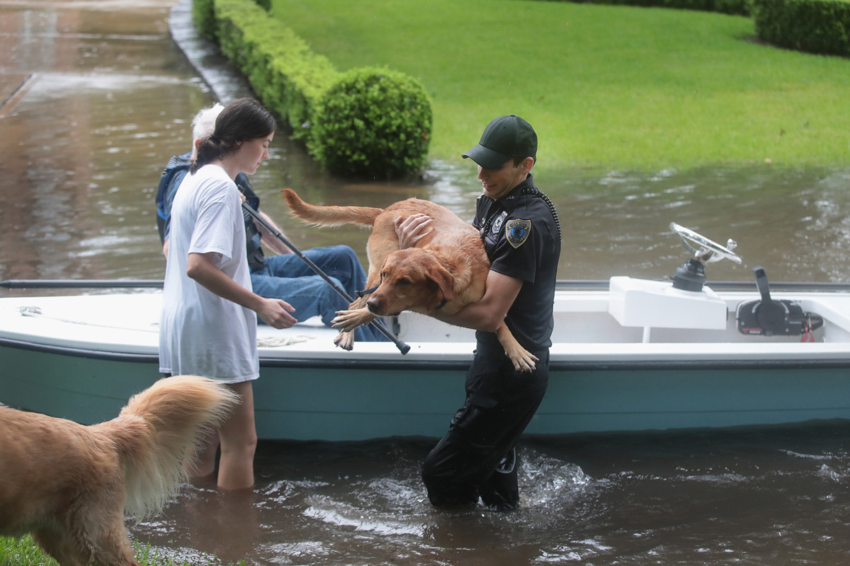 img 59ba2acbeaf05 - The Photos Show The Moment Of The Owners Saving Their Pets. They Were All Desperate