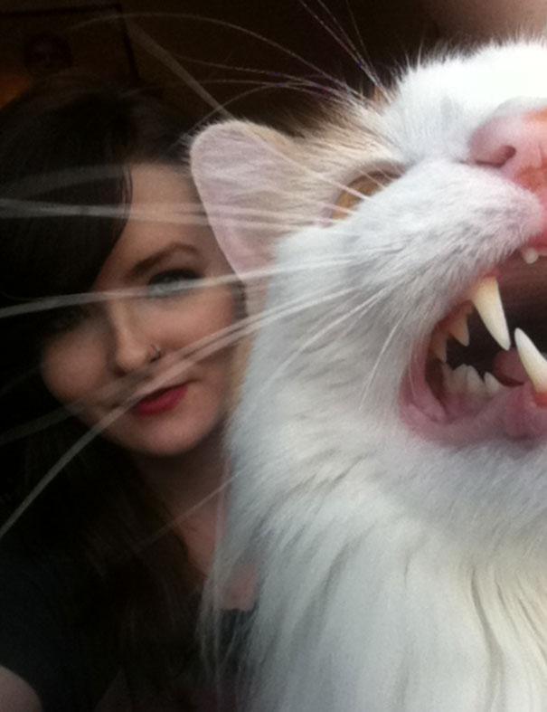 inflamedsense - 주인과 '셀카' 찍기 싫은 고양이들의 반응 (사진 15장)
