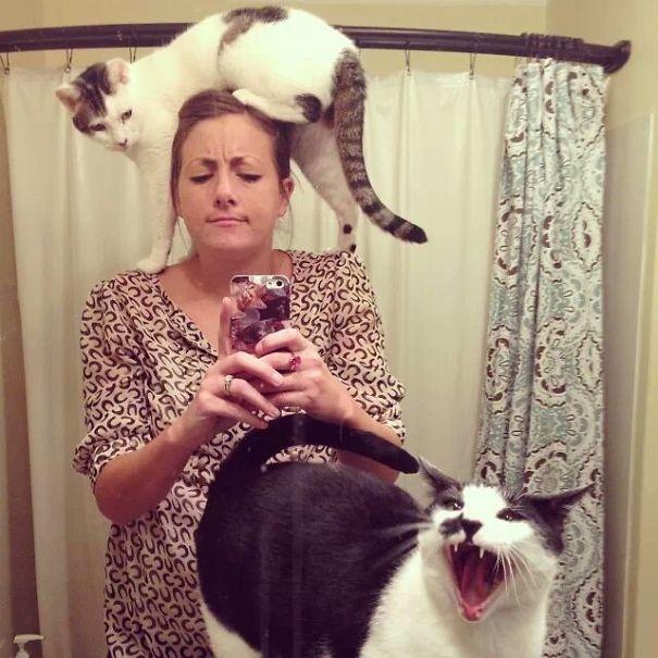 quicksilver3121 - 주인과 '셀카' 찍기 싫은 고양이들의 반응 (사진 15장)