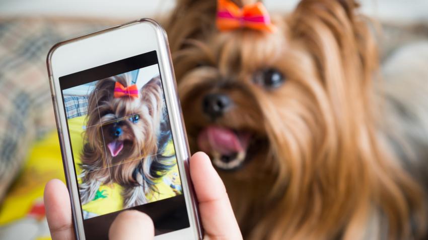 shutterstock 611625467 - 전문 사진작가가 알려주는 강아지 인생샷 꿀팁 6가지