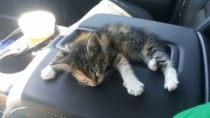 straybaby3 300x169 - Driver Suddenly Finds Baby Kitten In Front Of Him. He Takes Her In The Car