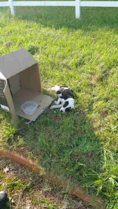 tmg article tall 169x300 - Cop Gets Unexpected Call. Arrives At Scene To Find Helpless Puppy In A Cardboard Box