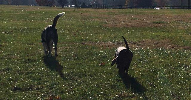 59 1 - A história dos cachorrinhos que não queriam se separar na hora da adoção