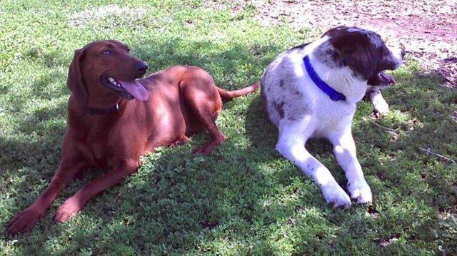 60 1 - A história dos cachorrinhos que não queriam se separar na hora da adoção