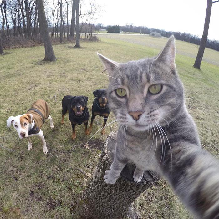 animals-about-to-drop-album-photos-58aeb7365dc60__700