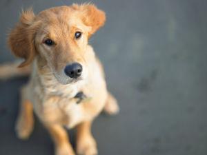 3 633 - なんで人間の気持ちがわかるの?「犬の心」の知識