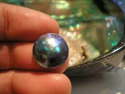 4 57 - 真珠ができる仕組みは?「真珠貝」の知識