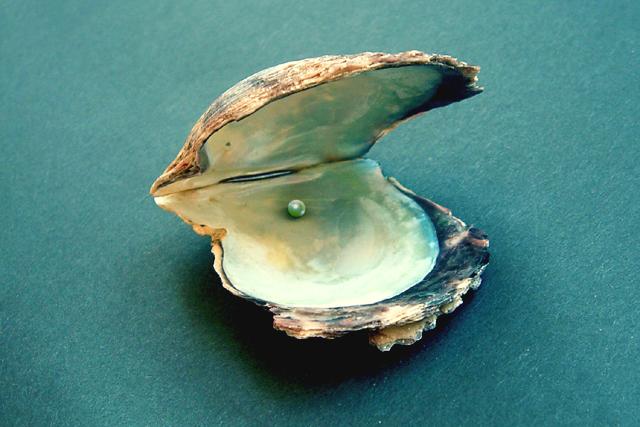 5 51 - 真珠ができる仕組みは?「真珠貝」の知識