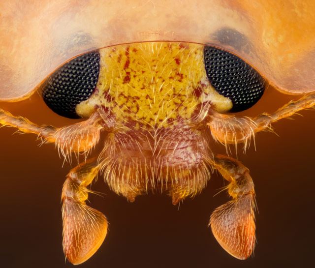 geir-drange-ladybug-15