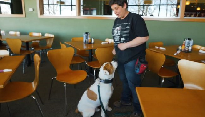 Service Dogs For Veterans Near Me