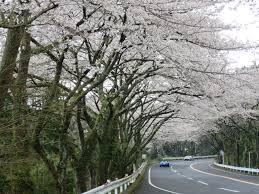 神奈川県の箱根ターンパイク에 대한 이미지 검색결과