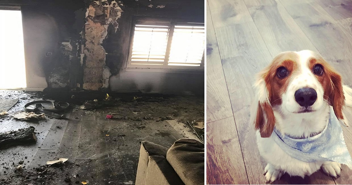 The Family Lost Their Dog In Burning House, And Soon After ...