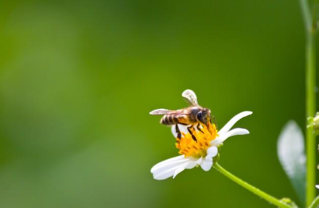 flora fondo petalo resorte de cerca 1172 437 - Gran Bretaña ha prohibido el uso de plaguicidas que exterminan a las abejas