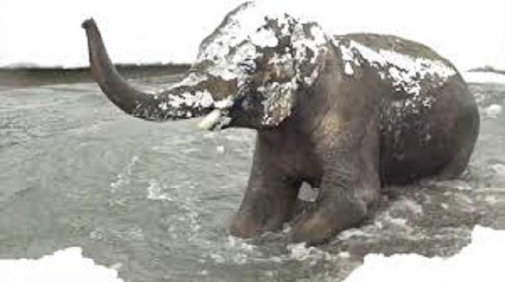 polar3 - 動物園因大雪強制閉園一日,攝影機卻拍到動物們超開心玩雪畫面!