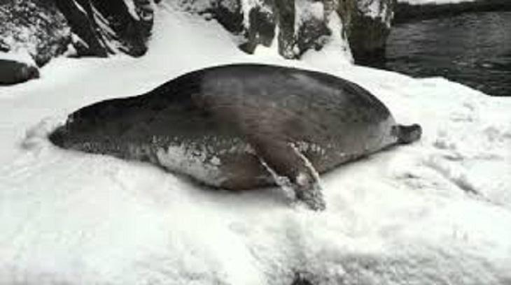 polar6 - 動物園因大雪強制閉園一日,攝影機卻拍到動物們超開心玩雪畫面!