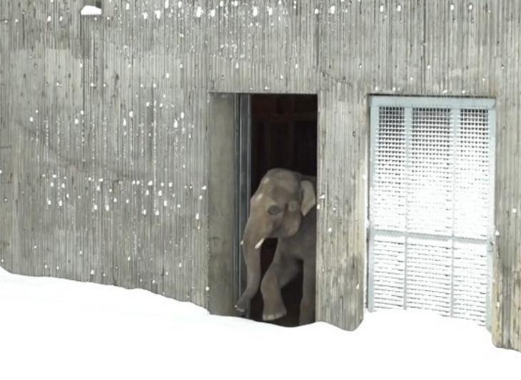 polarbear2 - 動物園因大雪強制閉園一日,攝影機卻拍到動物們超開心玩雪畫面!