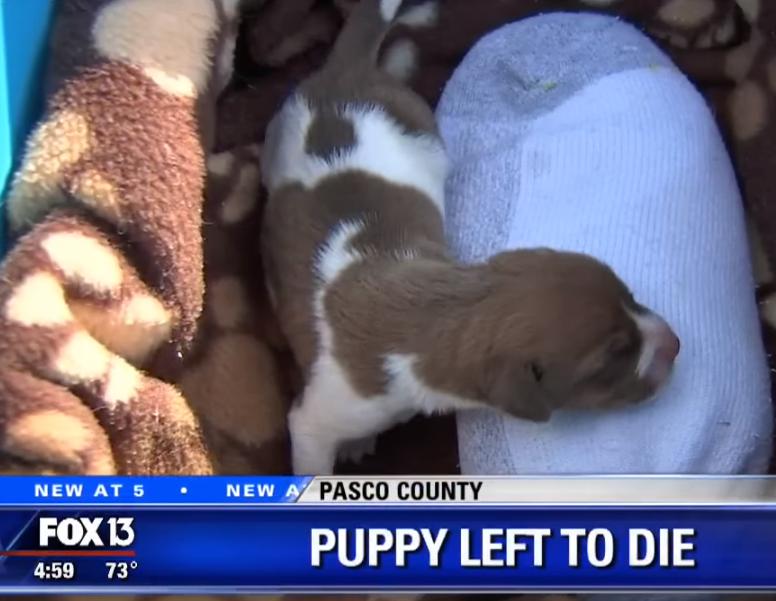 puppy1 - Quem teria coragem de amarrar um filhotinho nos trilhos de um trem?