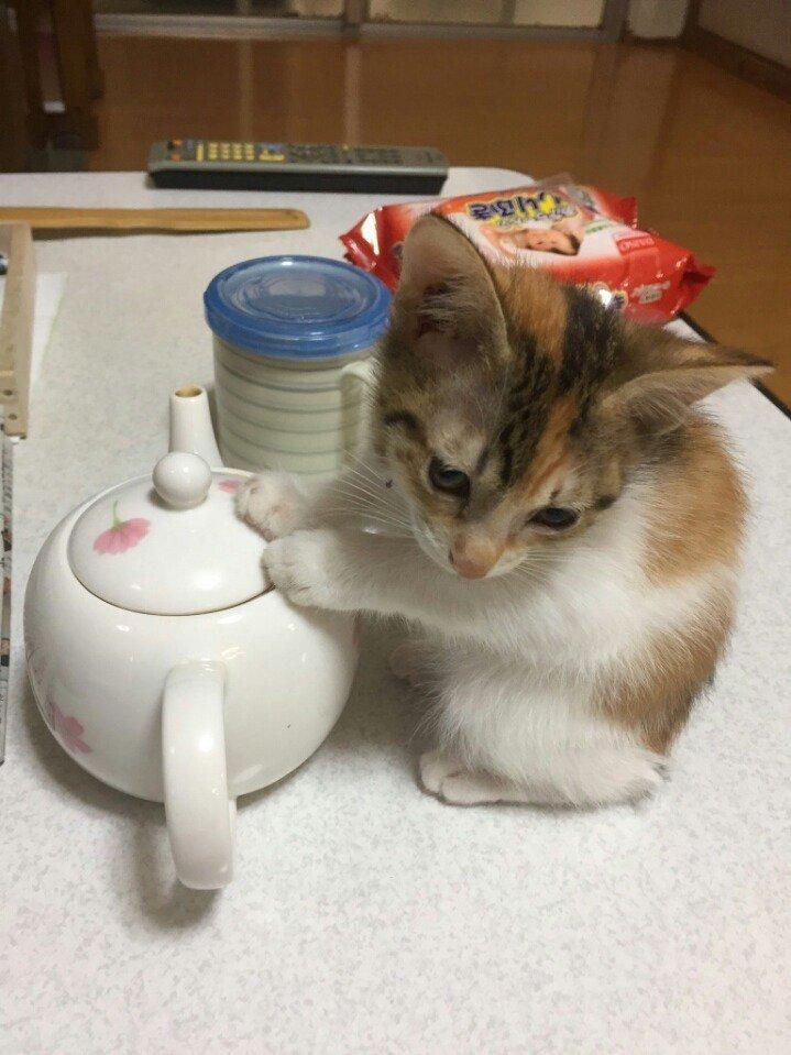 """1 396 - """"따뜻하다면 뭔들"""" 몸 데우는 고양이 사진에 랜선 집사들 '집단 심쿵사'(+28)"""