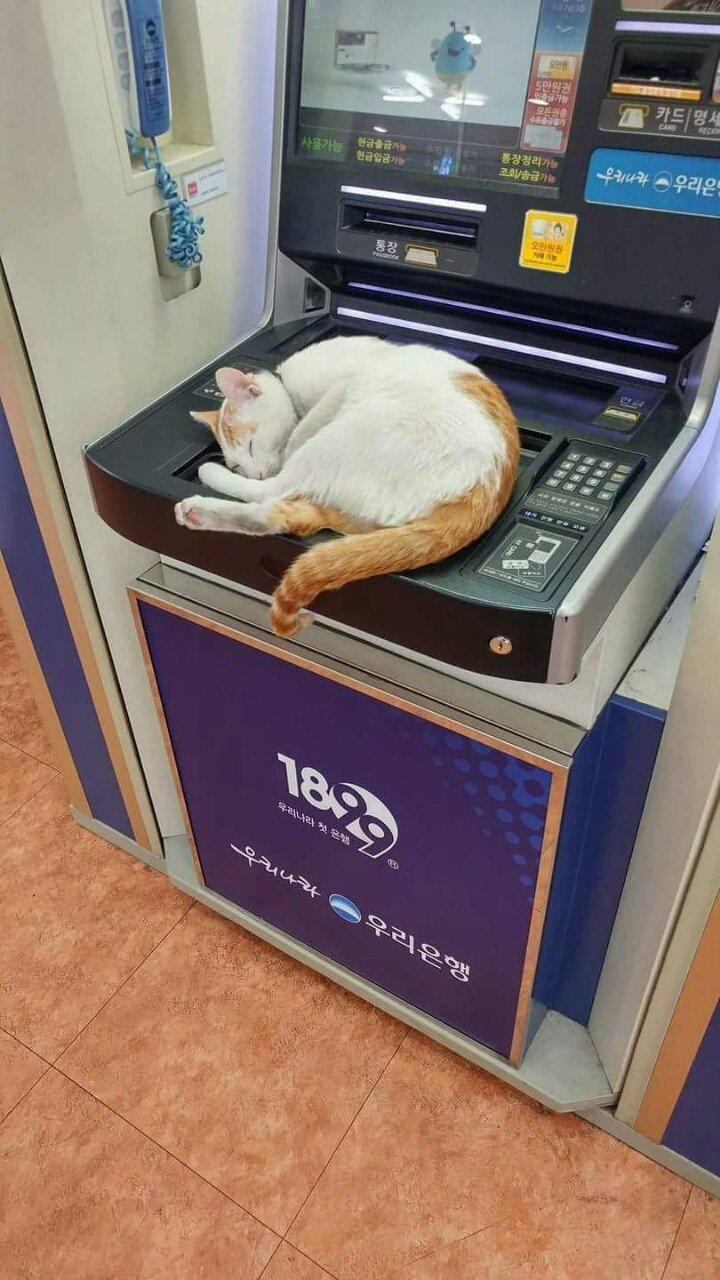 """10 106 - """"따뜻하다면 뭔들"""" 몸 데우는 고양이 사진에 랜선 집사들 '집단 심쿵사'(+28)"""