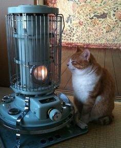 """11 91 - """"따뜻하다면 뭔들"""" 몸 데우는 고양이 사진에 랜선 집사들 '집단 심쿵사'(+28)"""