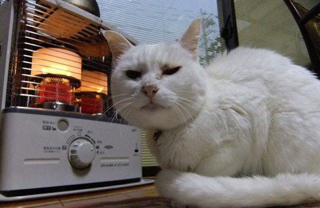 """13 61 - """"따뜻하다면 뭔들"""" 몸 데우는 고양이 사진에 랜선 집사들 '집단 심쿵사'(+28)"""