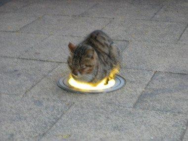 """17 30 - """"따뜻하다면 뭔들"""" 몸 데우는 고양이 사진에 랜선 집사들 '집단 심쿵사'(+28)"""