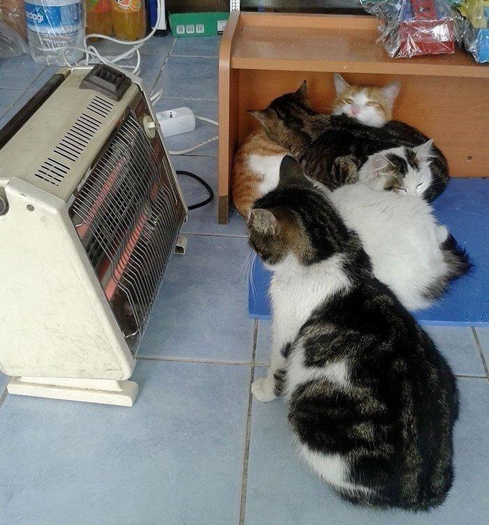 """18 26 - """"따뜻하다면 뭔들"""" 몸 데우는 고양이 사진에 랜선 집사들 '집단 심쿵사'(+28)"""