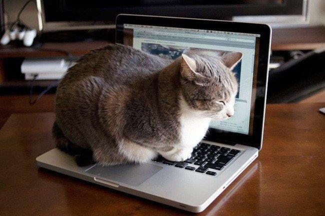 """21 21 - """"따뜻하다면 뭔들"""" 몸 데우는 고양이 사진에 랜선 집사들 '집단 심쿵사'(+28)"""