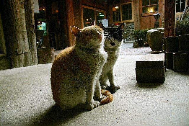 """23 19 - """"따뜻하다면 뭔들"""" 몸 데우는 고양이 사진에 랜선 집사들 '집단 심쿵사'(+28)"""