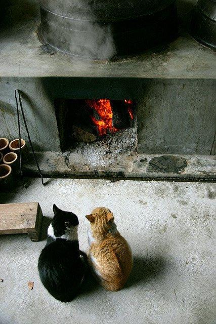 """24 18 - """"따뜻하다면 뭔들"""" 몸 데우는 고양이 사진에 랜선 집사들 '집단 심쿵사'(+28)"""