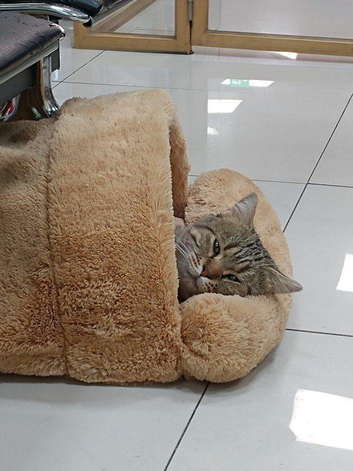 """3 378 - """"따뜻하다면 뭔들"""" 몸 데우는 고양이 사진에 랜선 집사들 '집단 심쿵사'(+28)"""