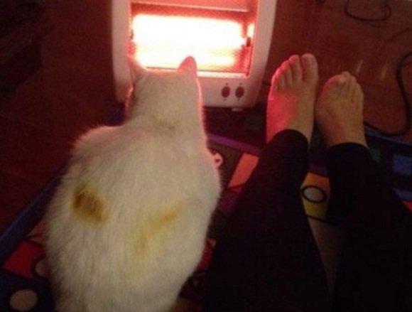 """4 345 - """"따뜻하다면 뭔들"""" 몸 데우는 고양이 사진에 랜선 집사들 '집단 심쿵사'(+28)"""