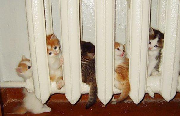 """5 287 - """"따뜻하다면 뭔들"""" 몸 데우는 고양이 사진에 랜선 집사들 '집단 심쿵사'(+28)"""