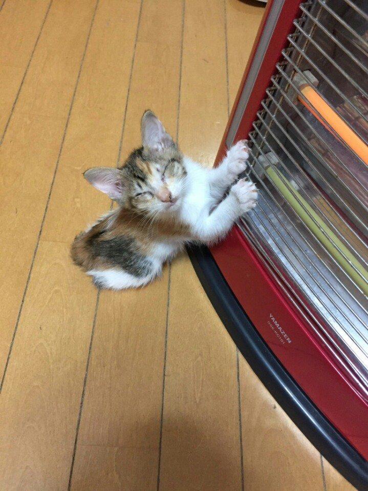 """6 198 - """"따뜻하다면 뭔들"""" 몸 데우는 고양이 사진에 랜선 집사들 '집단 심쿵사'(+28)"""