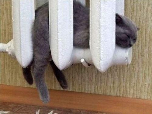 """7 165 - """"따뜻하다면 뭔들"""" 몸 데우는 고양이 사진에 랜선 집사들 '집단 심쿵사'(+28)"""