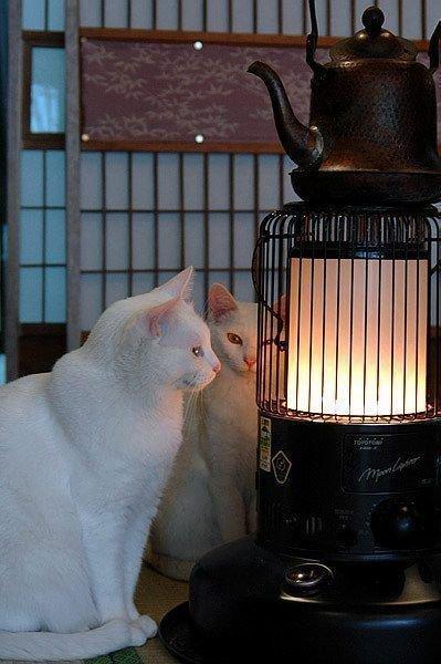 """8 146 - """"따뜻하다면 뭔들"""" 몸 데우는 고양이 사진에 랜선 집사들 '집단 심쿵사'(+28)"""