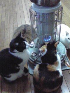 """9 126 - """"따뜻하다면 뭔들"""" 몸 데우는 고양이 사진에 랜선 집사들 '집단 심쿵사'(+28)"""
