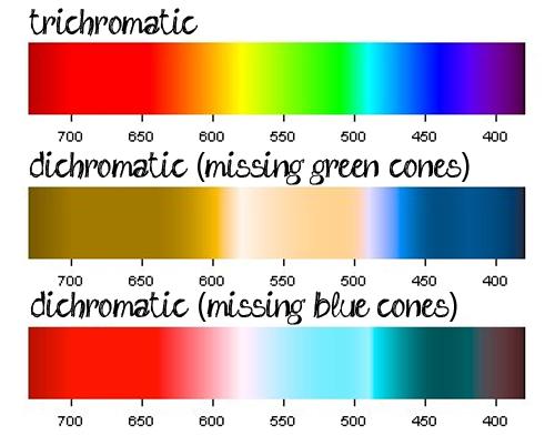 colourvision1 - 8 Anomalias genéticas que fazem as pessoas parecerem muito mais atraentes e bonitas