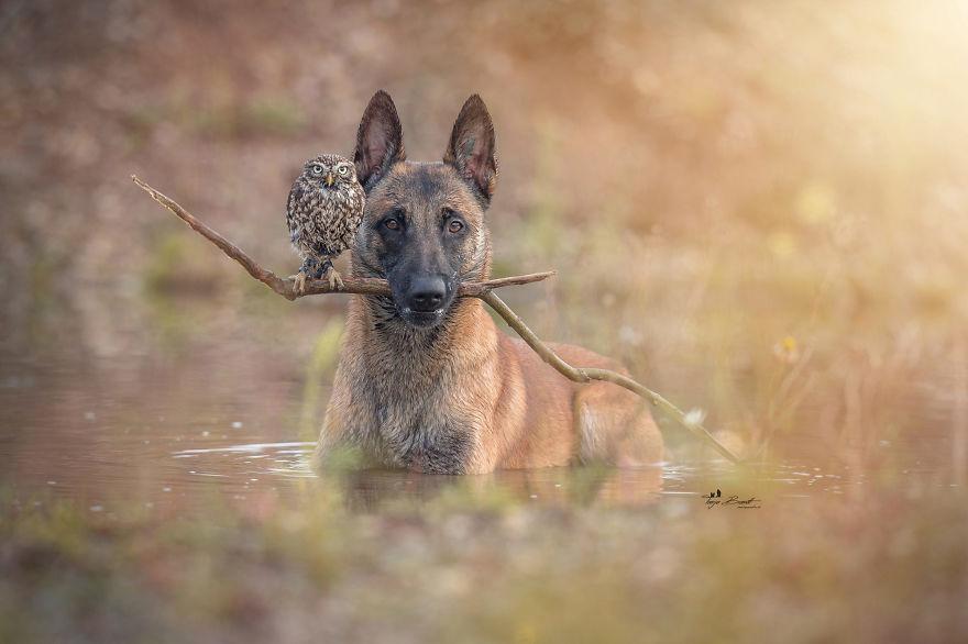 dogow3
