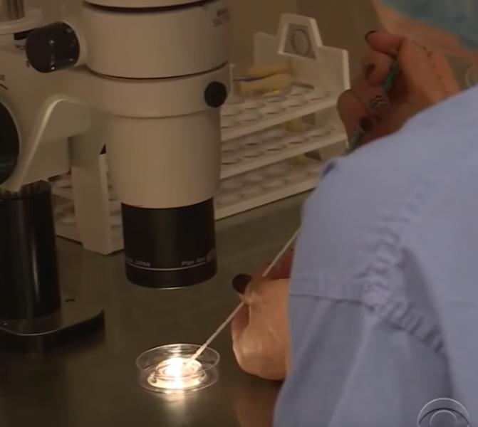 """embryo4 - Bebê """"milagroso"""" nasce de um embrião que havia sido congelado há 24 anos!"""