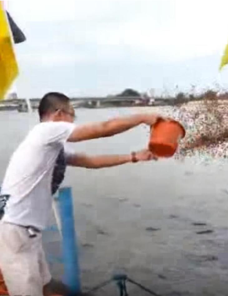 fish4 - Homem lança baldes de comida de peixe na água e o que acontece em seguida é simplesmente incrível