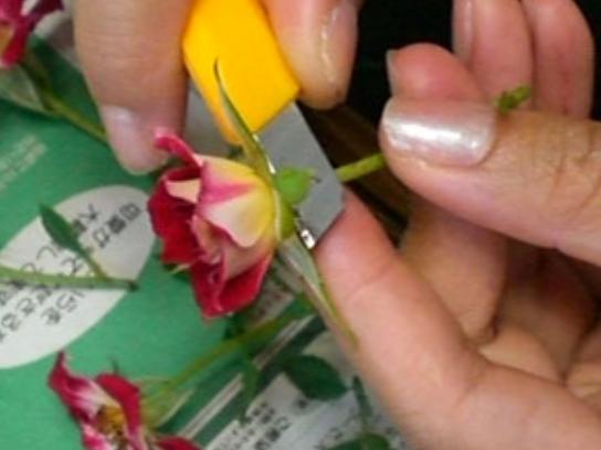 img 5a5871ef7b6cb - 未経験者でも超簡単に作れる!バラなどの押し花の作り方5選!