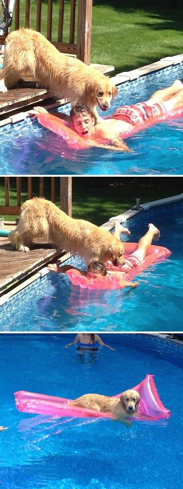 jerks4 - [Photos] 15 animaux de compagnie qui ont semé la pagaille au grand dam de leurs propriétaires